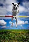 Zelda, RHOA, RHEXAJ: From Rescued Dog To Agility Champion by Alex Preiss
