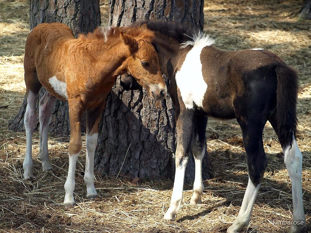 Foals  by kimbarose