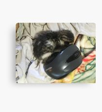kitten and mouse Canvas Print
