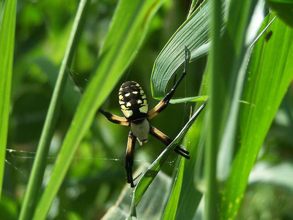 Itsy Bitsy Spider by jennawren13