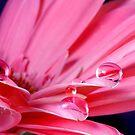 Carmine Tears by SmoothBreeze7