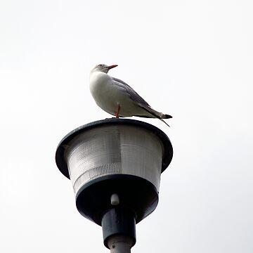 seagull by jessrobbo