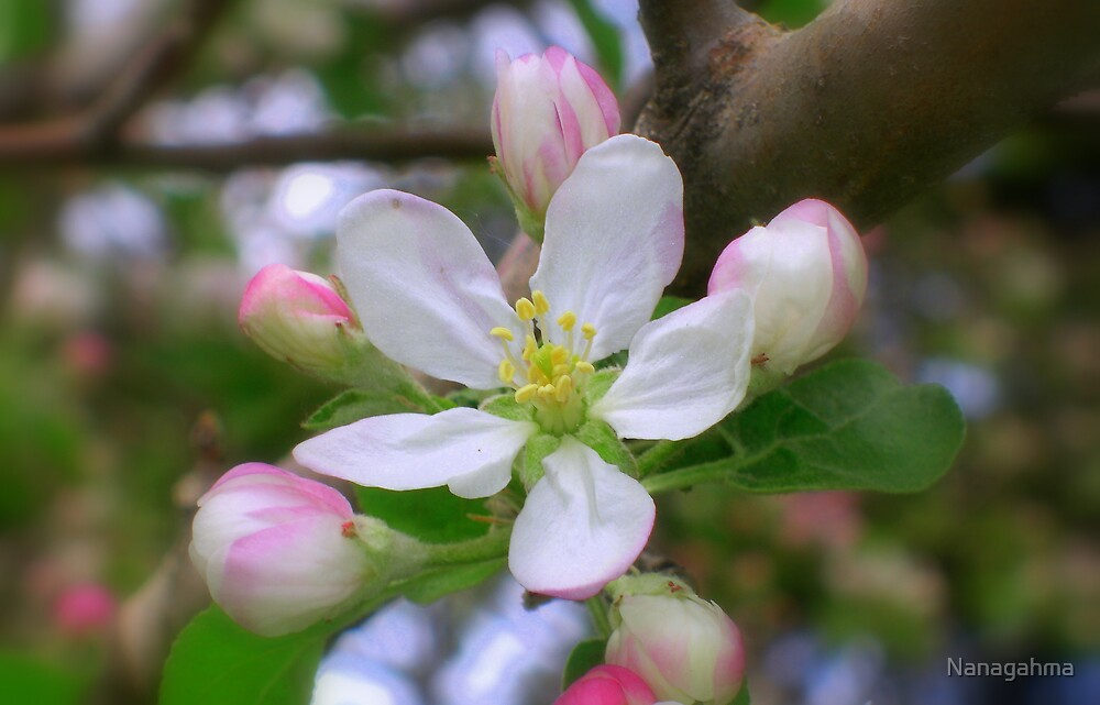 Apple Blossom Time by Nanagahma