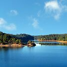 Paradise Lake by Nikki Collier