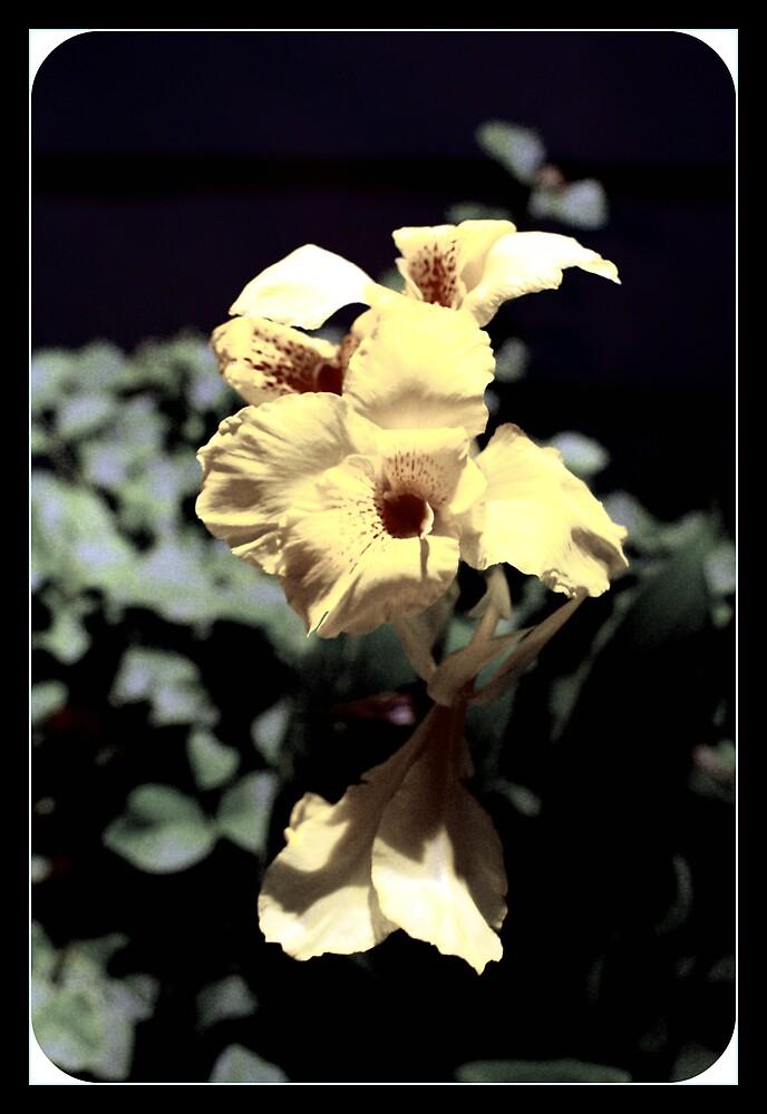 The Flower In My Backyard by Shannon Byous Ruddy