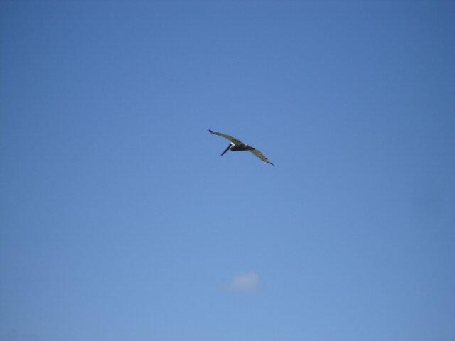 Free Flight by Dario  da Silva