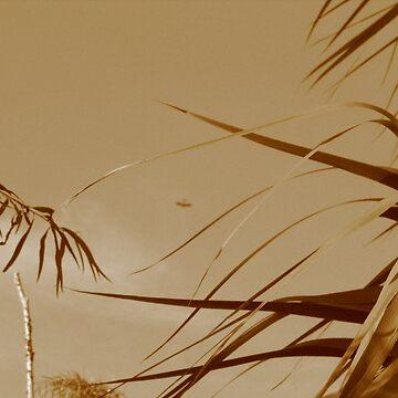 Old Skool Sepia by Kelwin