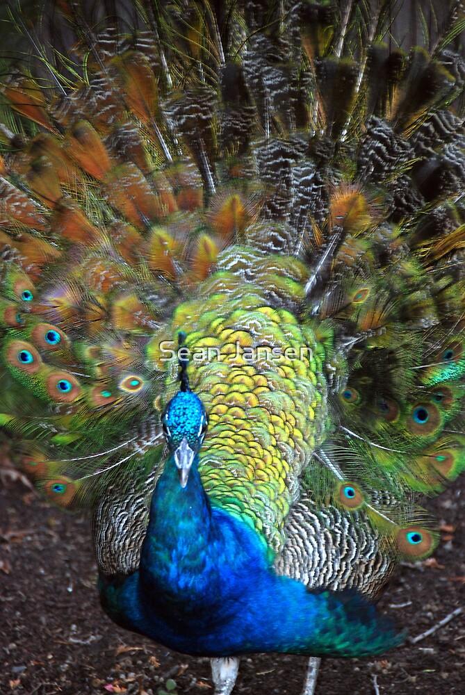 Feathered by Sean Jansen