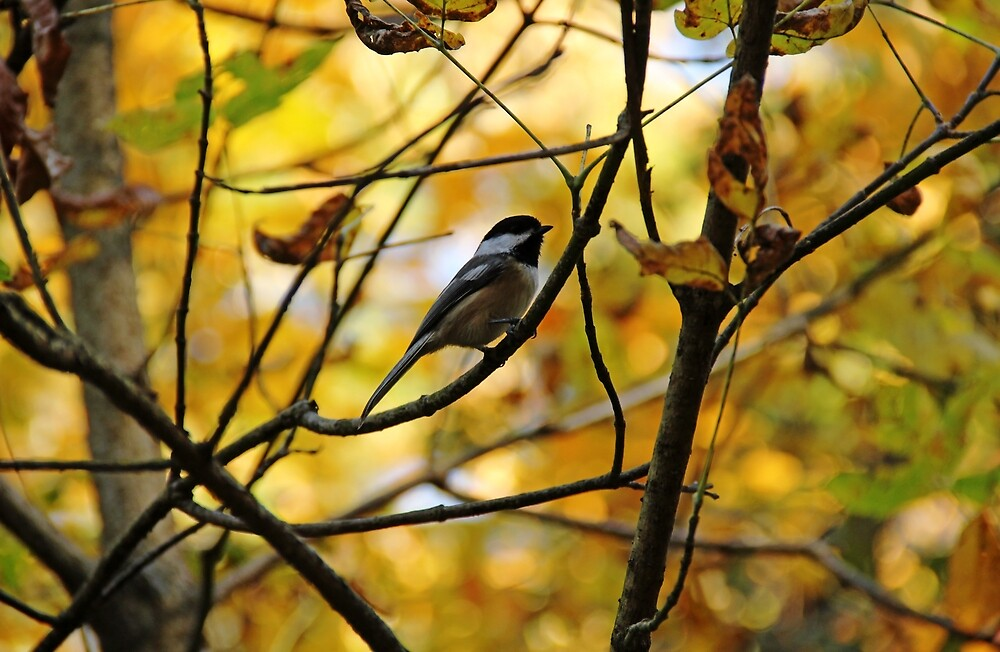 Chickadee In Autumn by Debbie Oppermann