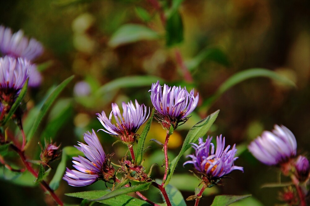 Autumn Purple by Debbie Oppermann