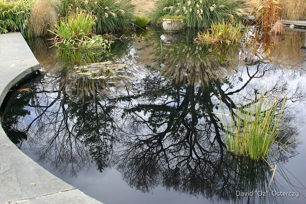 """The Frog Pond by David """"Oz""""  Osterczy"""