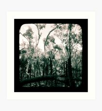 Bush Country Art Print