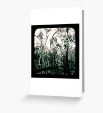 Bush Country Greeting Card