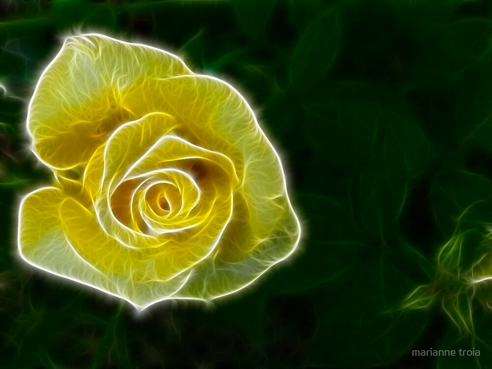yellow rose by marianne troia