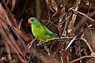 Swift Parrot ~ Critically Endangered by Robert Elliott