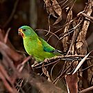Swift Parrot ~ Critically Endangered by Robert Elliott