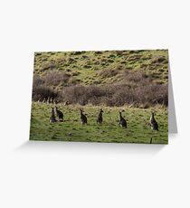 Kangaroos On Butterman's Track Victoria 20170819 1064 Greeting Card