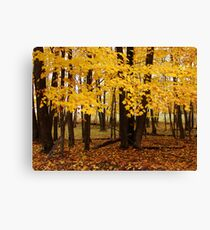 Second Spring Canvas Print