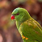 Scaly-breasted Lorikeet  by Robert Elliott