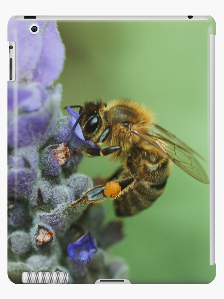 Honeybee by Joy Watson
