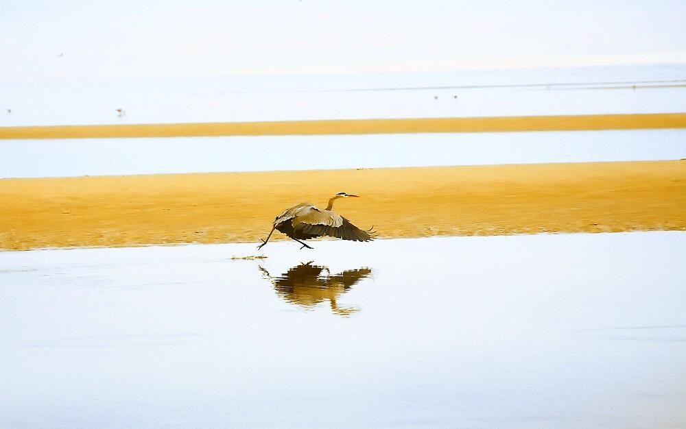 Blue Heron. by Artist Dapixara