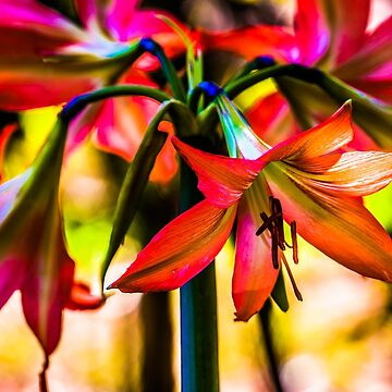 Red Lillies by Annmb78