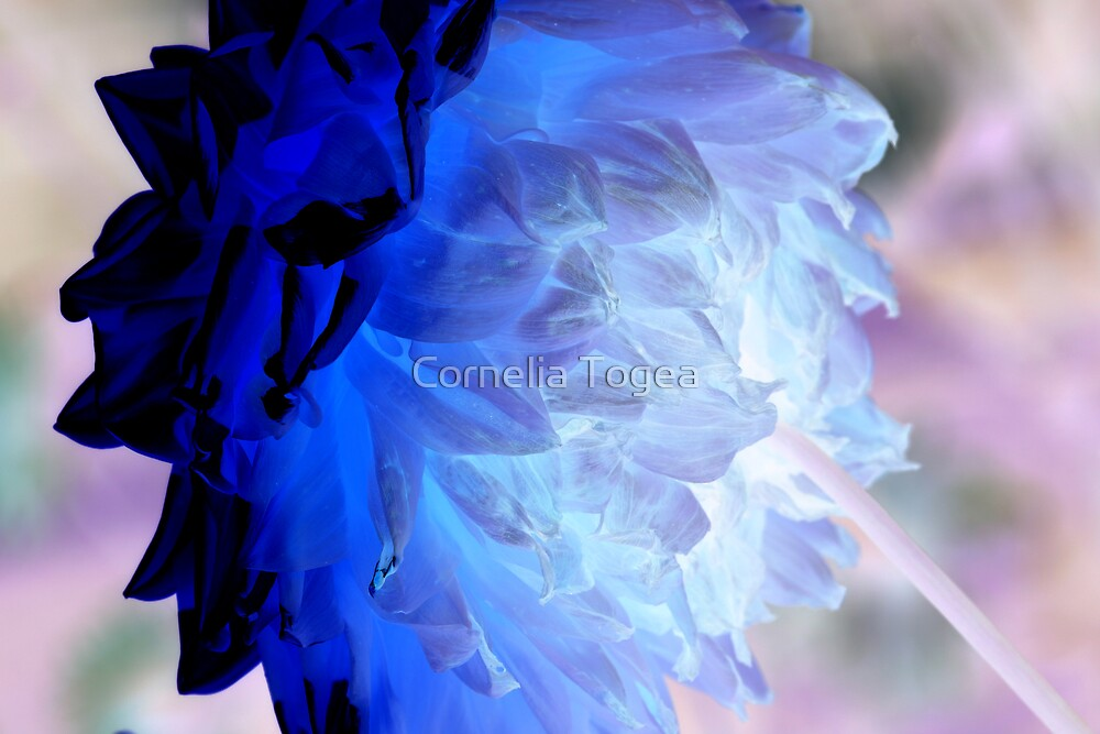 like... day and night... and blue by Cornelia Togea