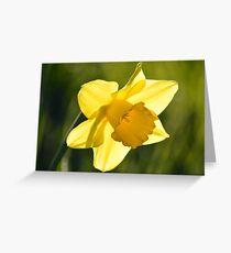 Dancing Daffodil Greeting Card