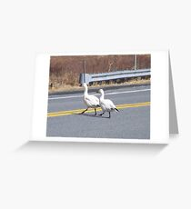 Snow Geese crossing the road Greeting Card