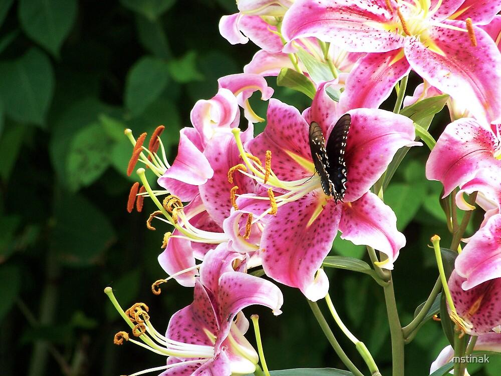 Star Gazer Lily with Spicebush swallowtail butterfly by mstinak