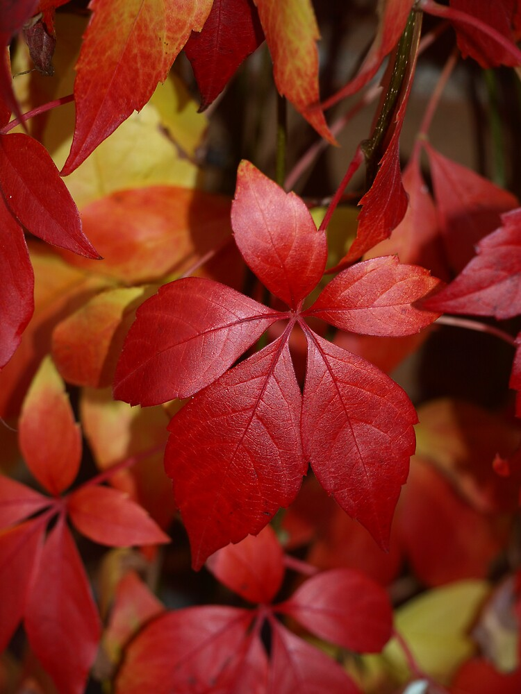 autumn leaves by makpics