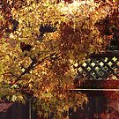 Russet Autumn by Fay270