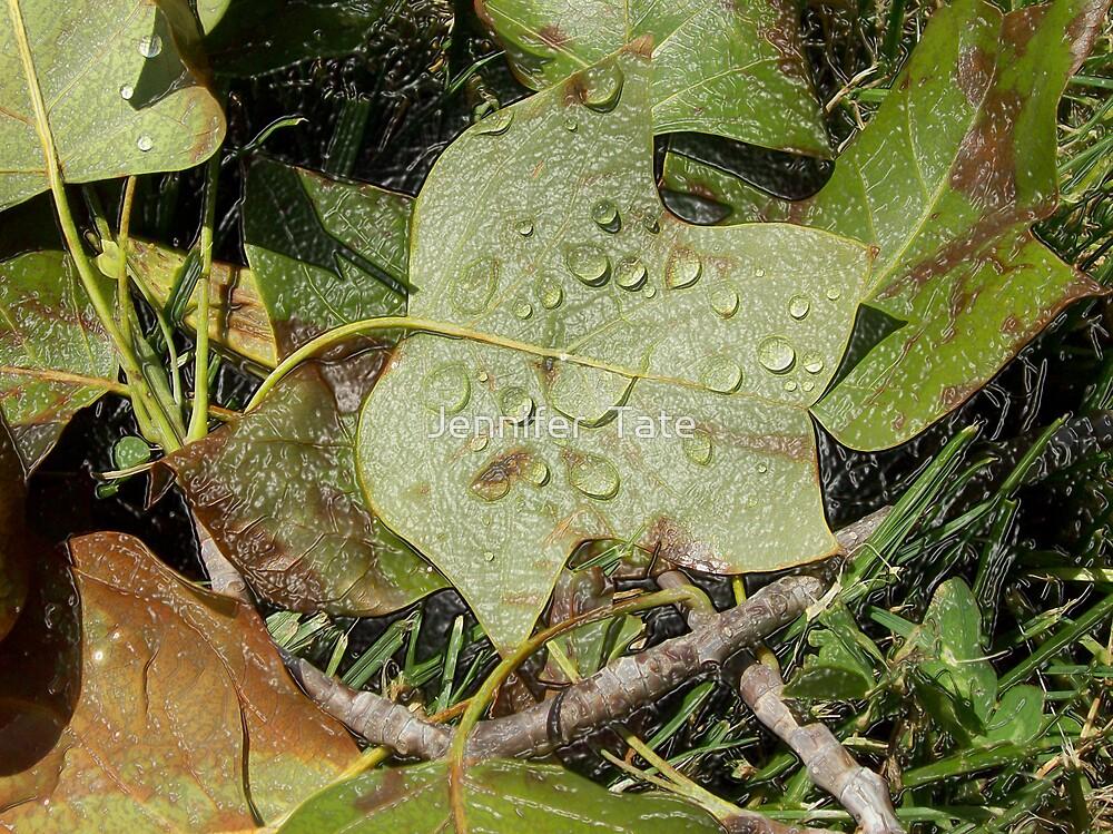 Wet Drops by Jennifer  Tate