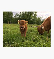Scottish Highland Cattle Cow and Calf 1407 Photographic Print