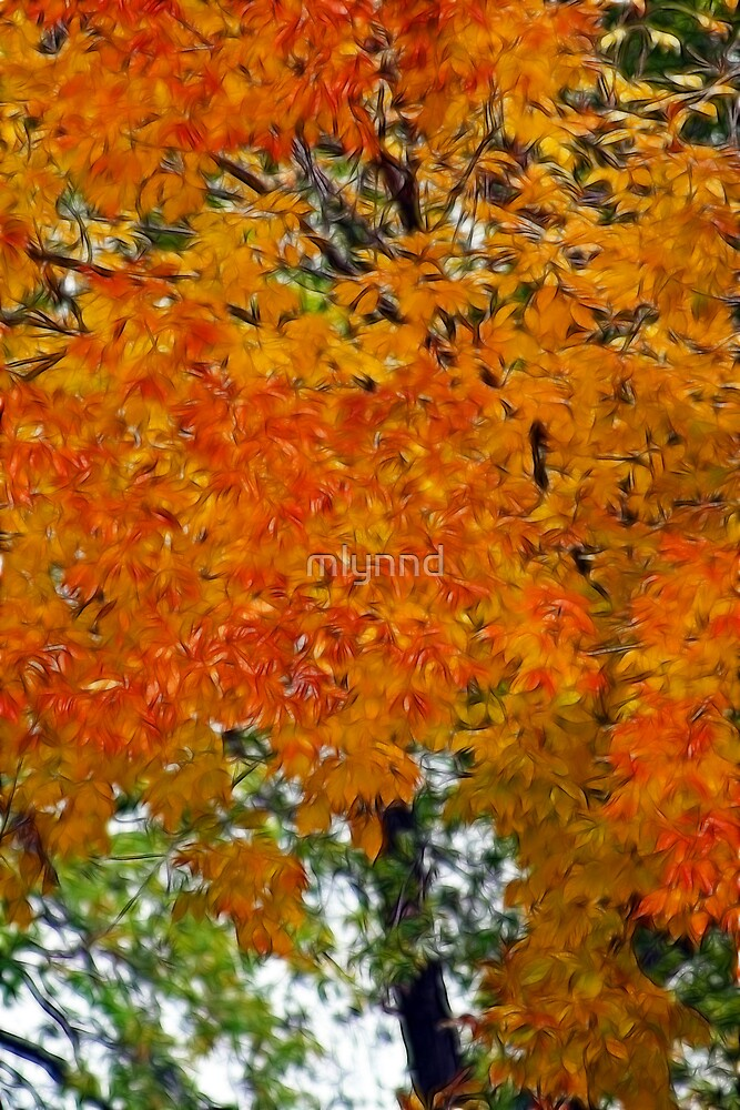 FALL COLORS  by mlynnd