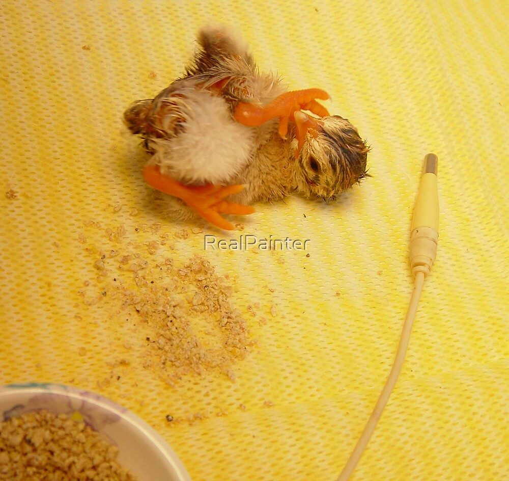 LUTSEN the Swedish Guinea baby by RealPainter