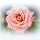SOFT PINK ROSE by Elaine Bawden
