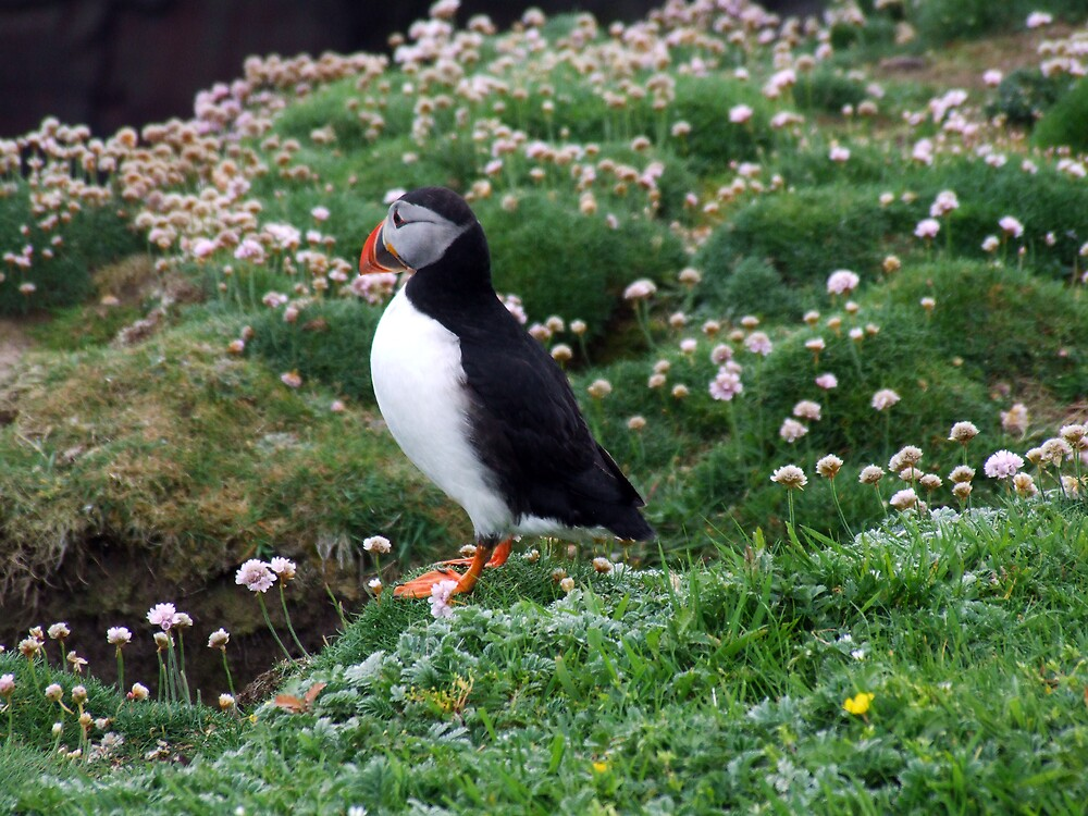 My Puffin by Twscats