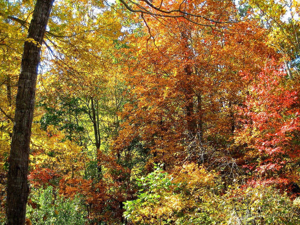 OCTOBER BEAUTY AT MY HOUSE by Ruth Kauffman