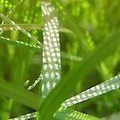 Sun Dot Grass by megga