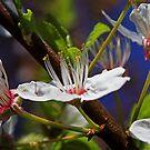 Flower by zolim