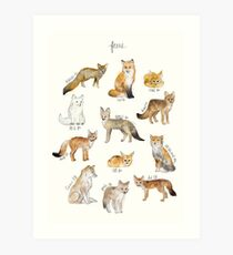 Foxes Art Print
