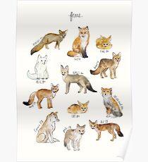 Füchse Poster