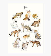 Foxes Photographic Print