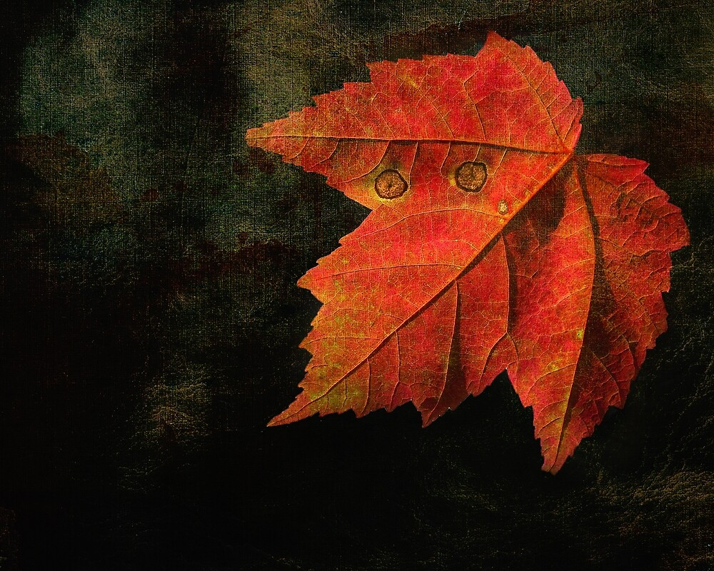 Autumn Eyes  by Kathilee