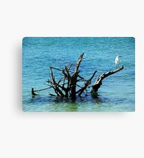 Snowy Perched On Driftwood Canvas Print