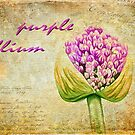 Purple Allium Bud by Lois  Bryan