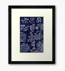 Fungus And Lichen Chart Framed Print
