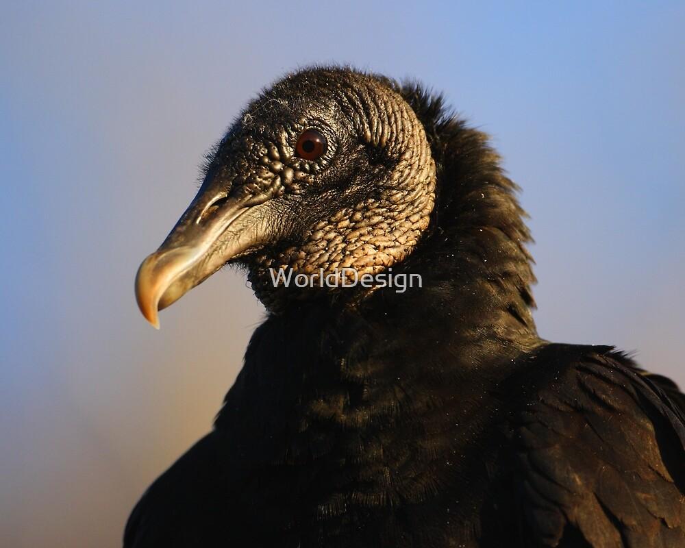 Black Vulture & Blue Sky by WorldDesign