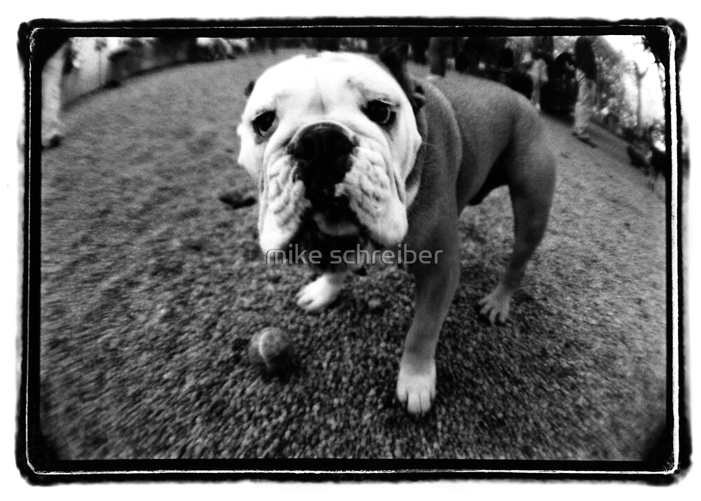 dog with ball by mike schreiber